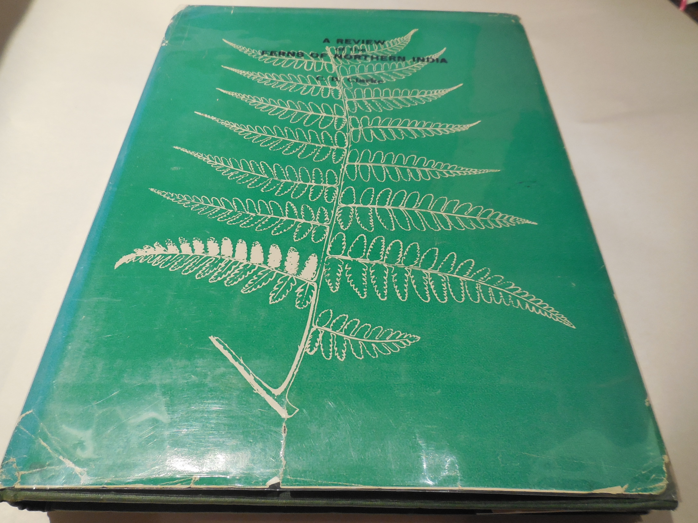 Image for A Review of the Ferns of Northern India